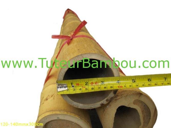 moso bambou mao bambou